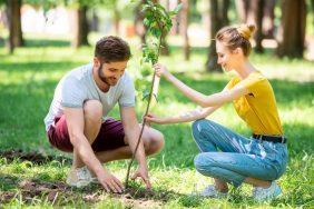 O que fazer para o Dia do Meio Ambiente: Mutirão de plantio de árvores
